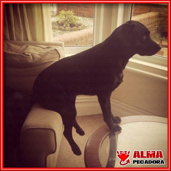 Este perro impresiona haciendo equilibrismos sentado al filo del trompazo