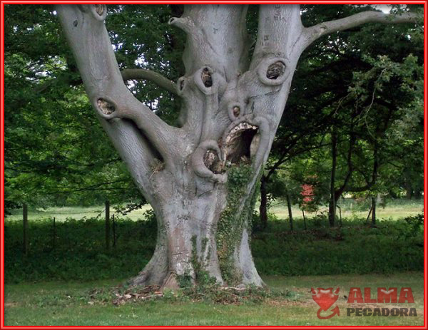 La cara de un monstruo es lo que parece este extraño árbol