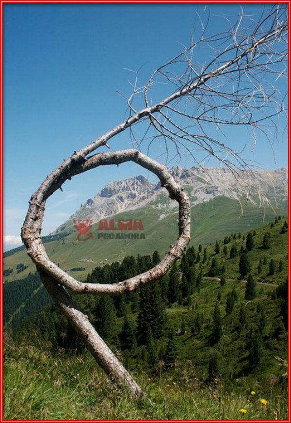 La forma de este árbol es totalmente inusual en la naturaleza