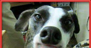 La lengua de este perro me ha dejado estupefacto , chicas no penséis eso , por favor...