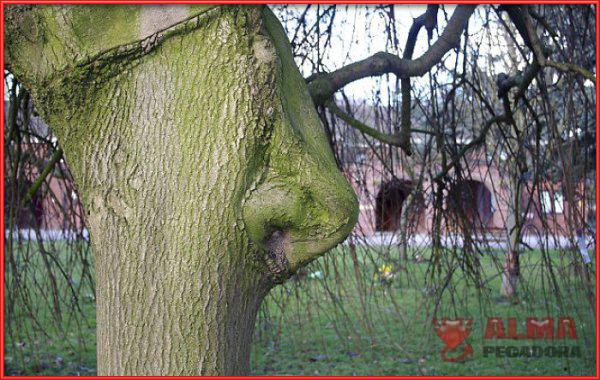Os presentamos al árbol de los olores puesto que tiene nariz y todo
