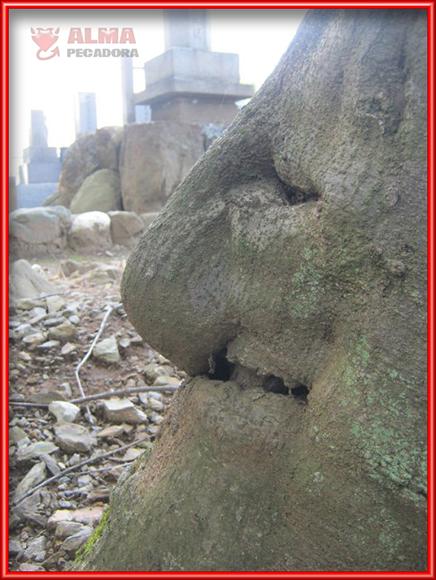 Otro árbol con forma de cara y una gran nariz que nos deja asombrados