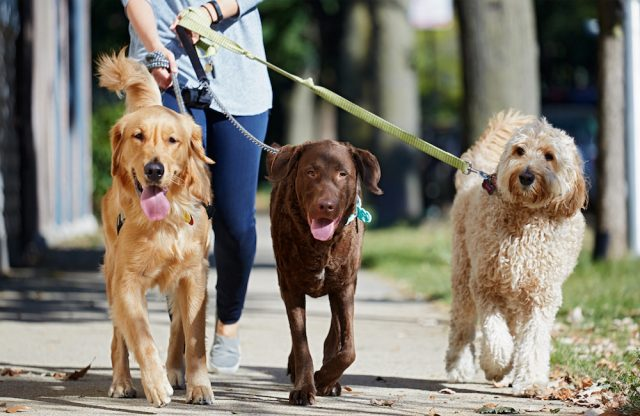 China prohíbe pasear a los perros por el día