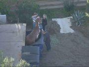Noticia viral de un Caballo atrapado en contenedor de basura